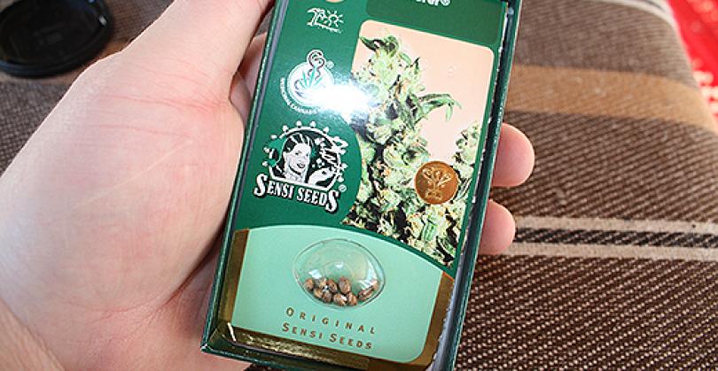 Er cannabisfrø lovlige?