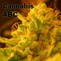 Cannabis ordbog