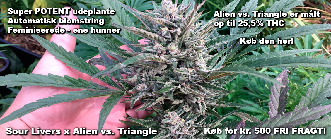Køb Sour Livers x Alien vs. Tiangle her